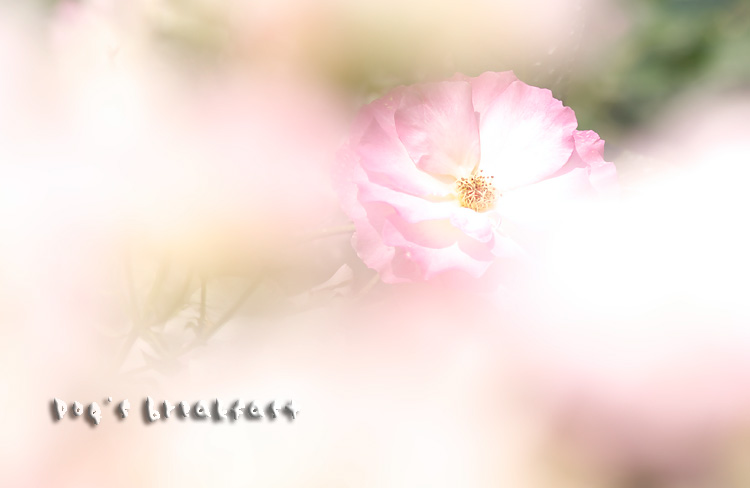 20080517e